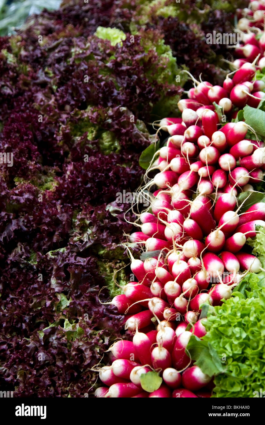 Radishes and lettuce for sale at Borough Market, London - Stock Image
