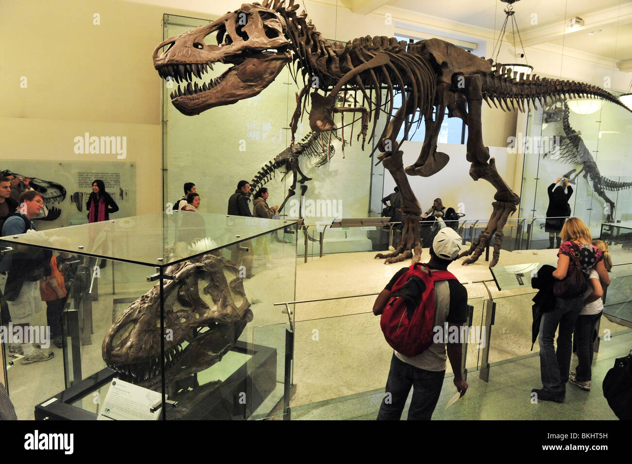 New York City American Museum of Natural History - Stock Image