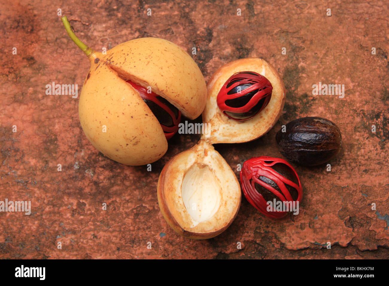 Vrucht van de Nootmuskaatboom, in diverse stadia van ontpellen; met de rode foelie als zaadmantel/zaadrok om de - Stock Image