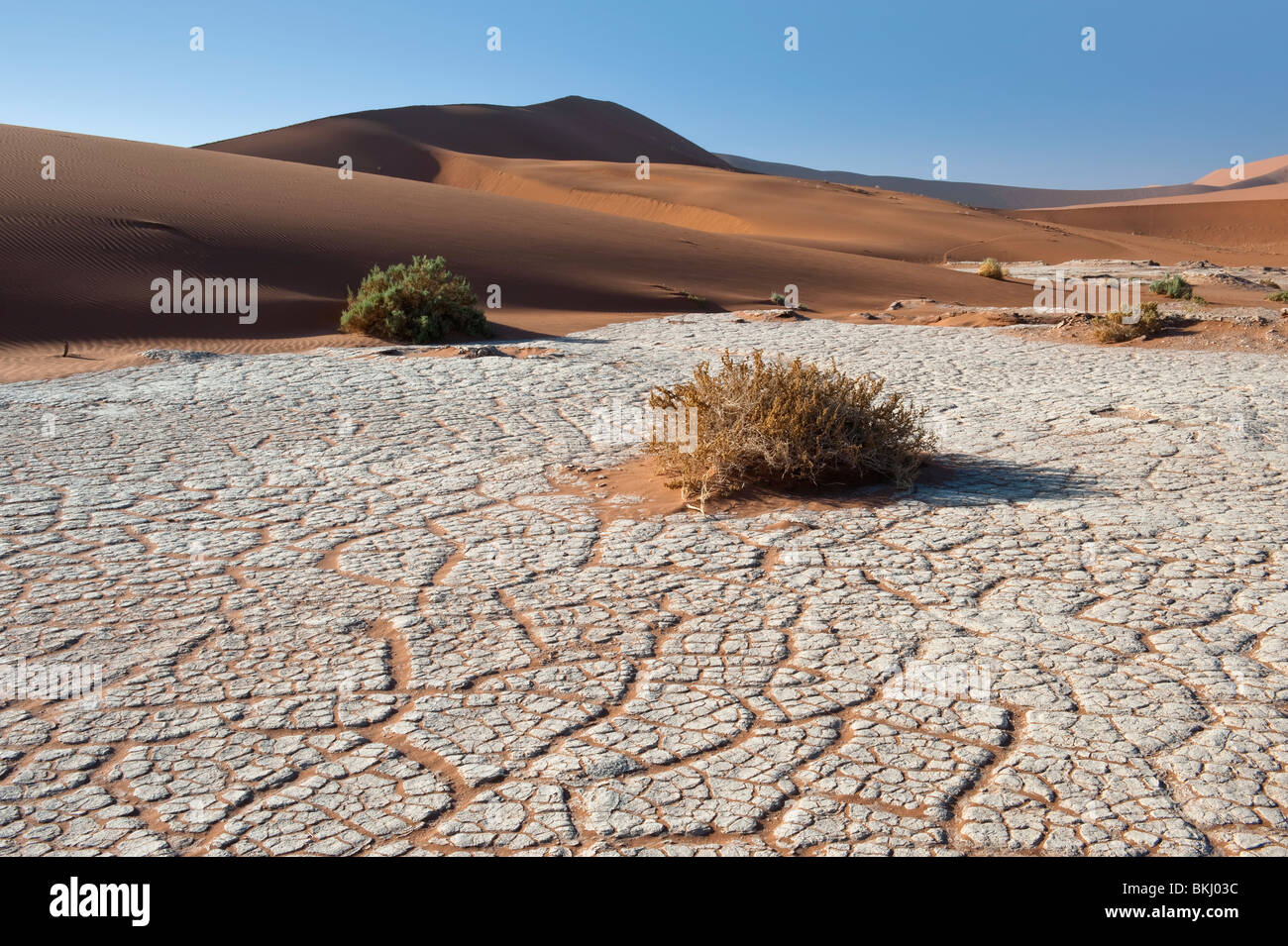 Dry River Bed Leaving a Craquelure Effect in the White Clay in Sossusvlei, Namibia Stock Photo