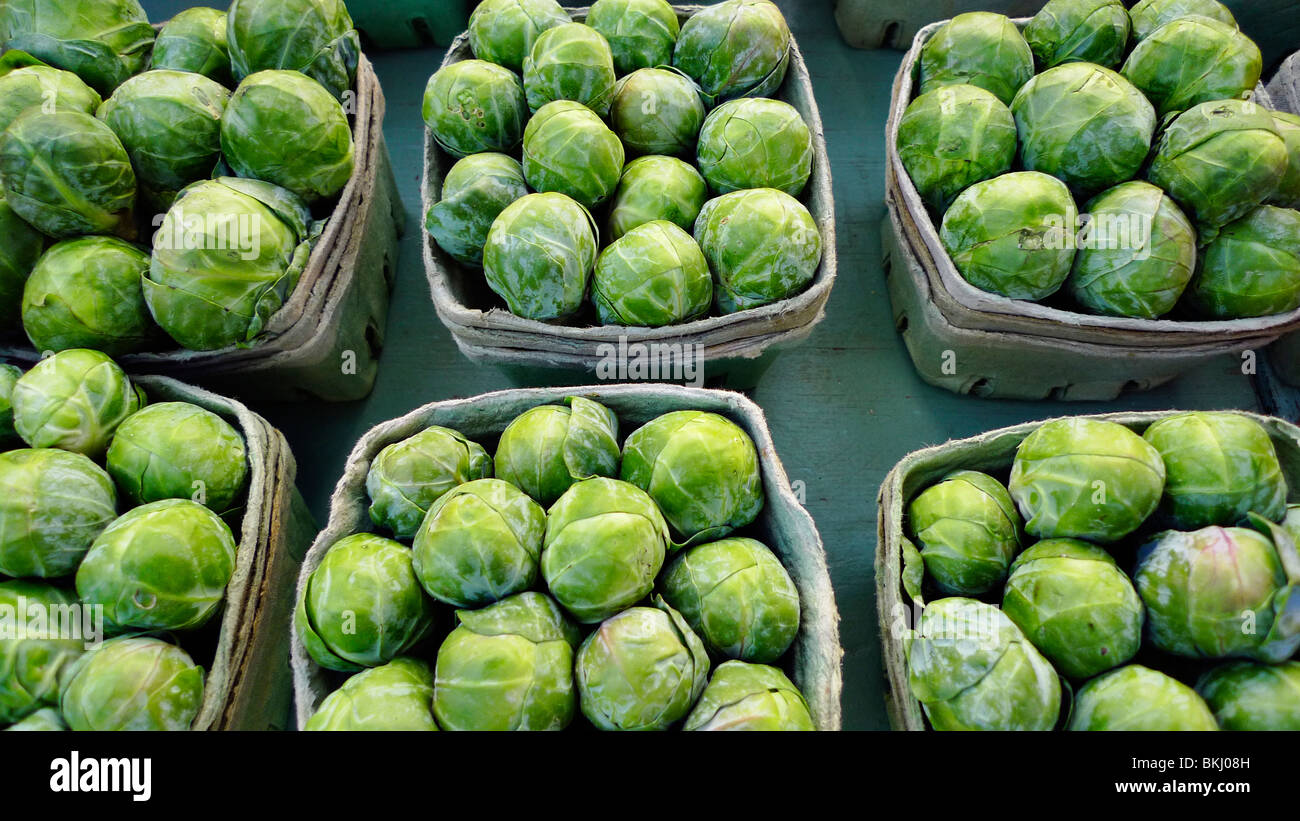 Freshly picked organic brussel sprouts on display at farmers market. - Stock Image