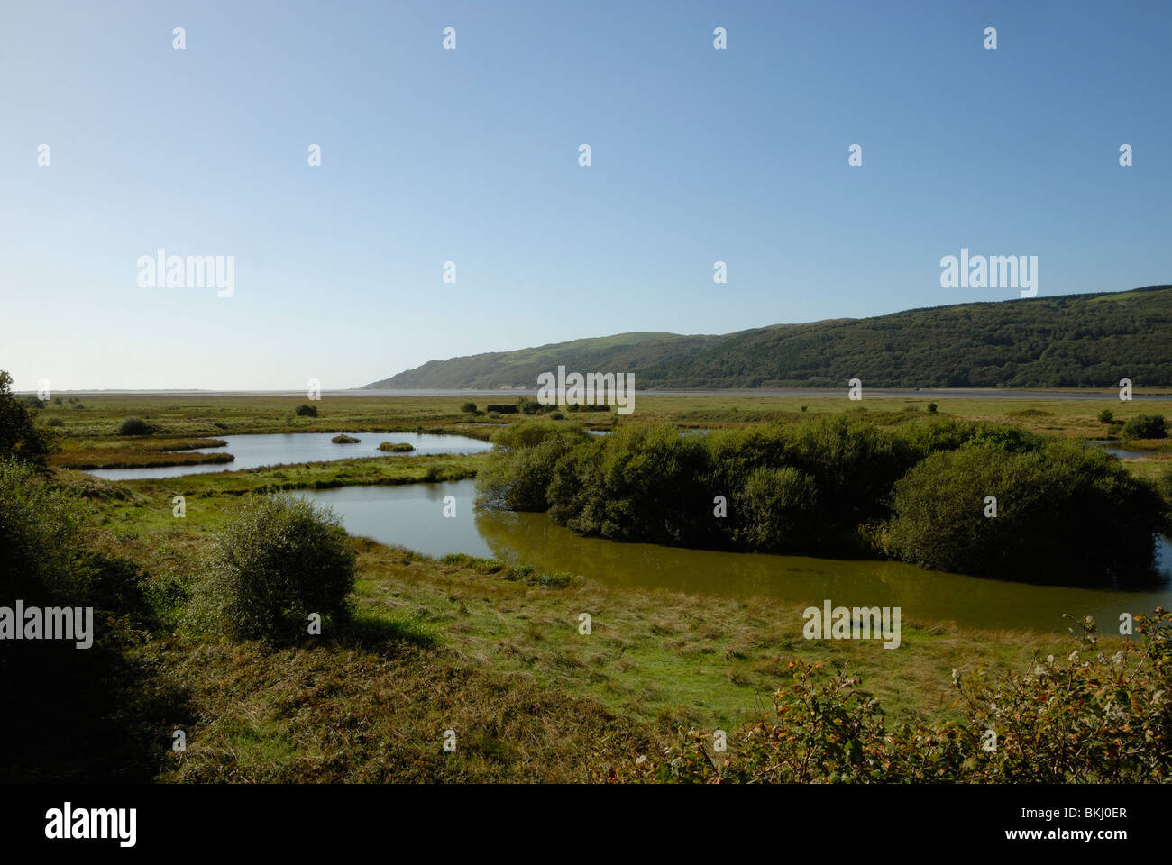 Marian Mawr pools with the Dyfi estuary behind, Ynys Hir RSPB Nature Reserve, Powys, Wales. Stock Photo