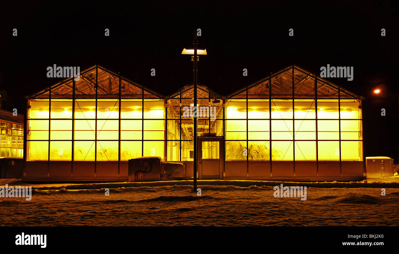 Warm light emitting from winter green houses at night. Stock Photo