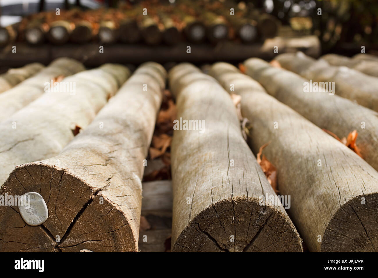 Stacked cut timber poles used for fencing, carrying markings confirming standardised timber treatment. South Africa. - Stock Image