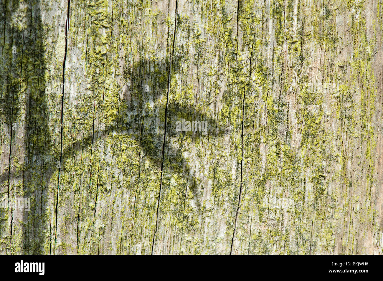 Sunlight casting a plant leaf shadow on an old wooden post in a garden - Stock Image