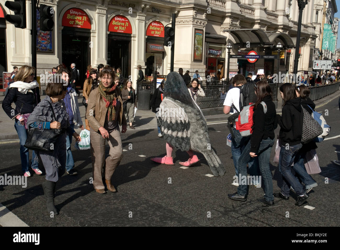 a man in a pigeon outift crossing a london road - Stock Image