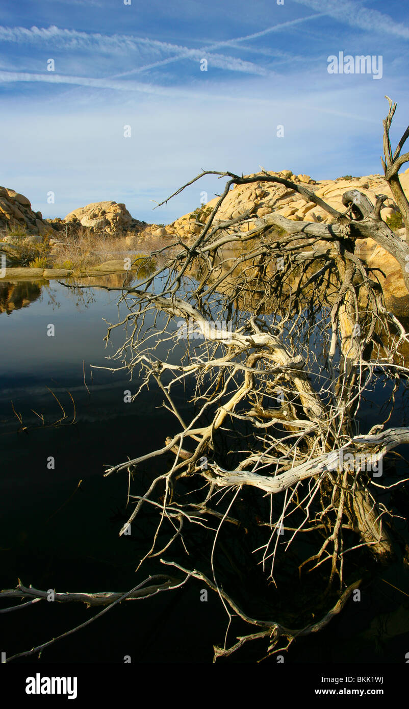 Barker dam Joshua tree National park - Stock Image