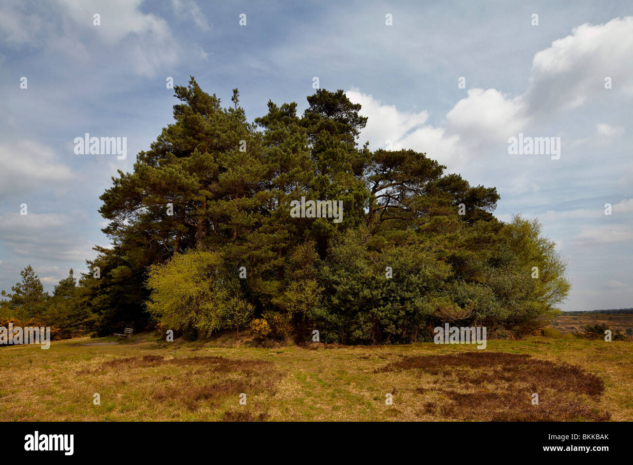 Gills Lap, Ashdown forest, England.The enchanted place at the top of the forest in the Winnie the Pooh stories by - Stock Image
