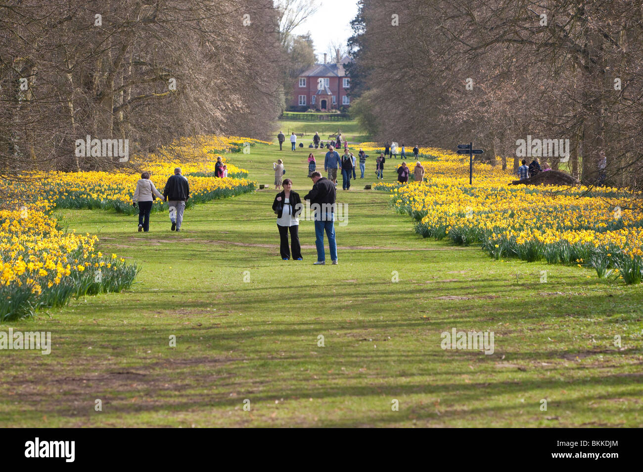 people and families walking in Nowton Park, UK - Stock Image