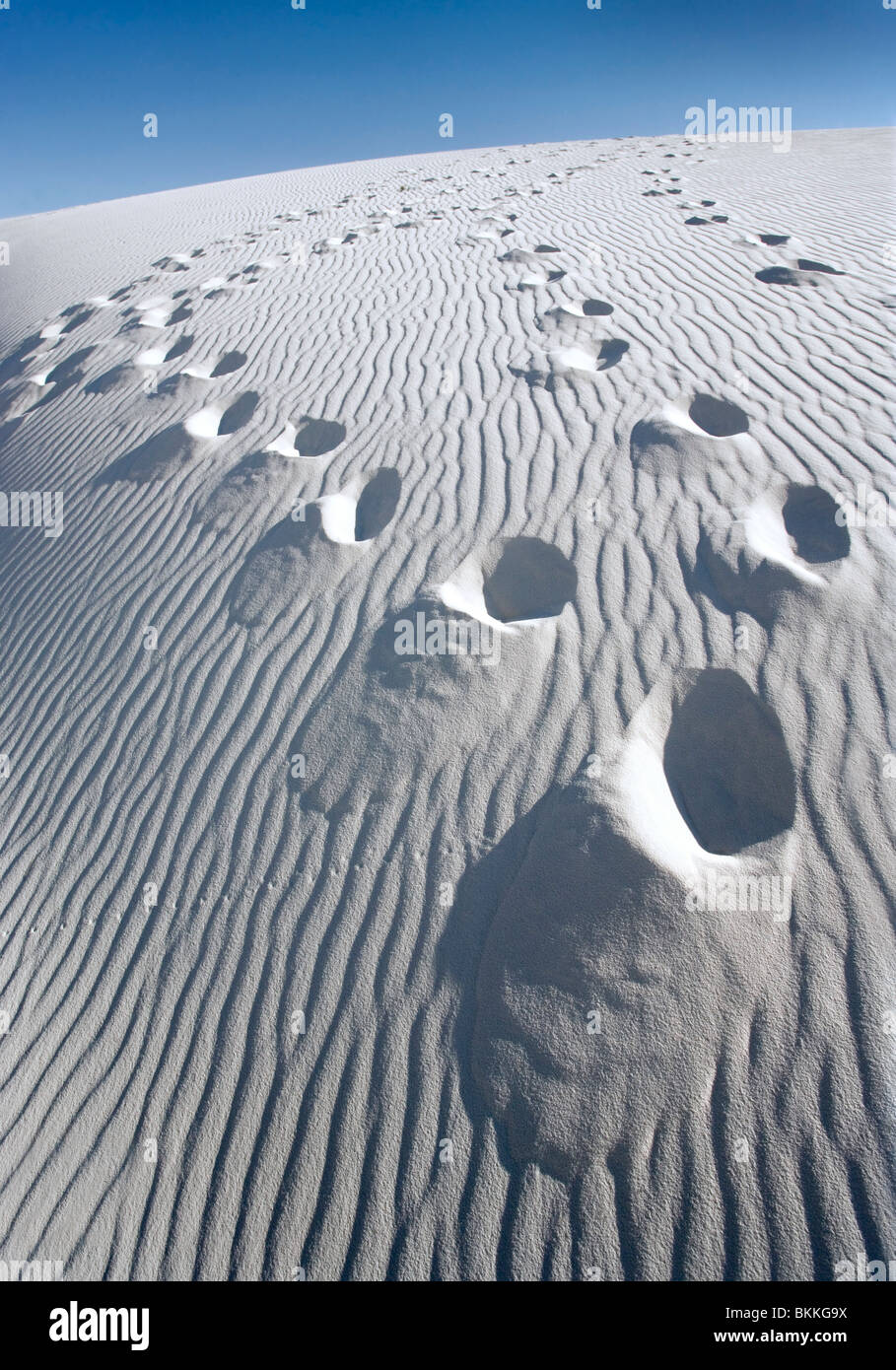 Footprints on a large white sand dune at White Sands National Monument, New Mexico. - Stock Image