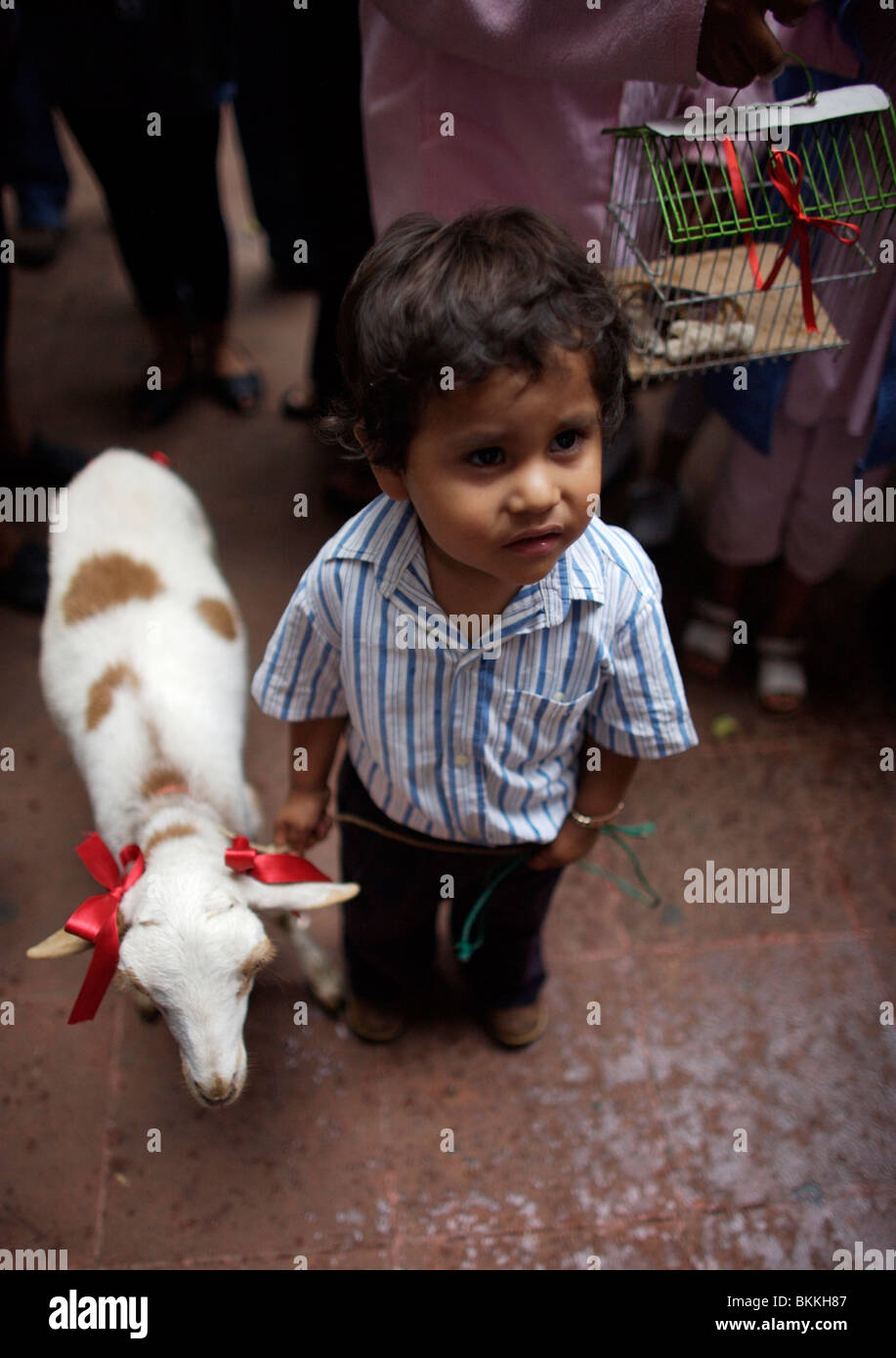 A boy holds his sheep by a leash as he attends the Blessing of the Animals celebration in Oaxaca, Mexico.Stock Photo