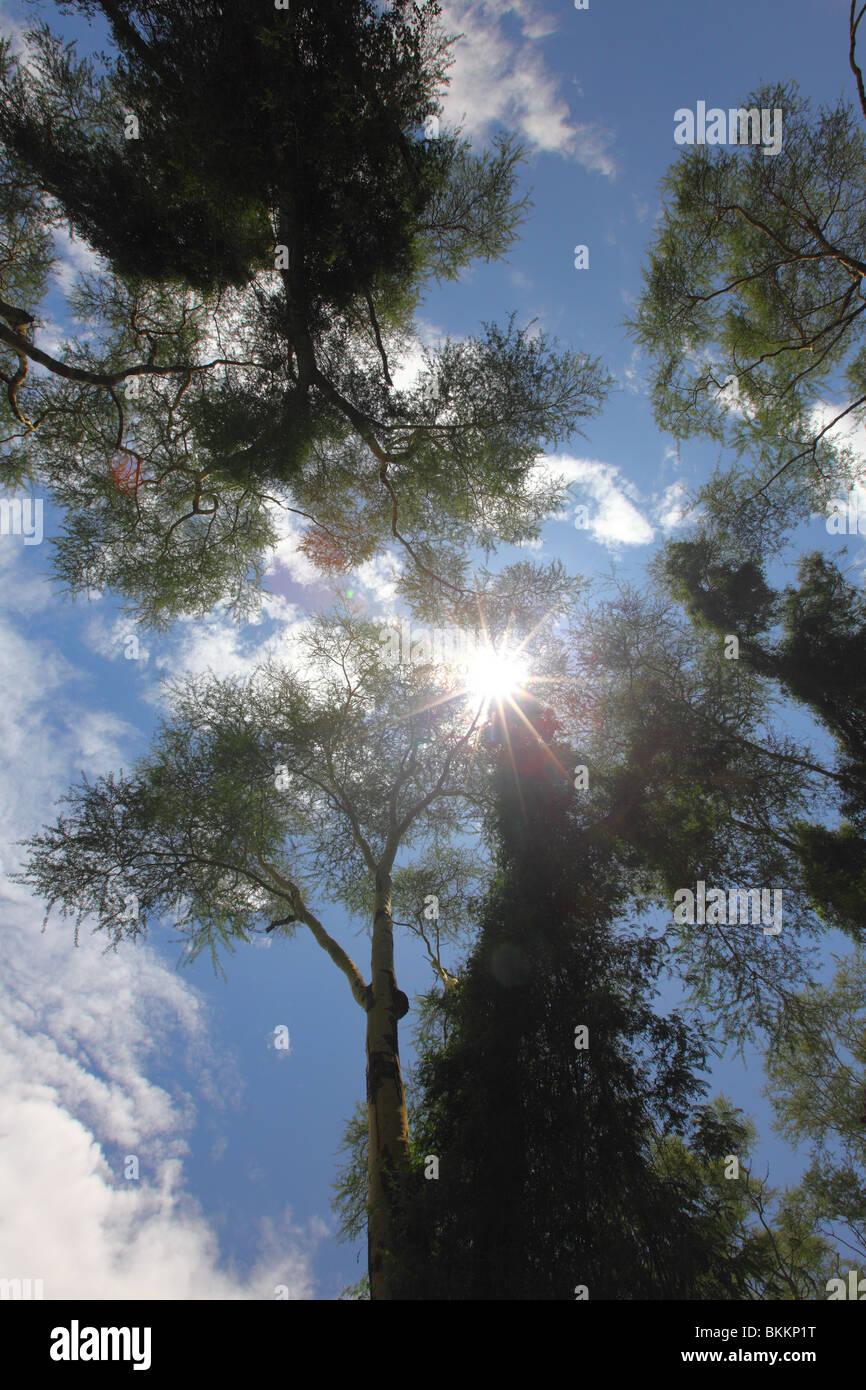 Kenya, Lake Nakuru National Park, landscape nature trees bushland - Stock Image