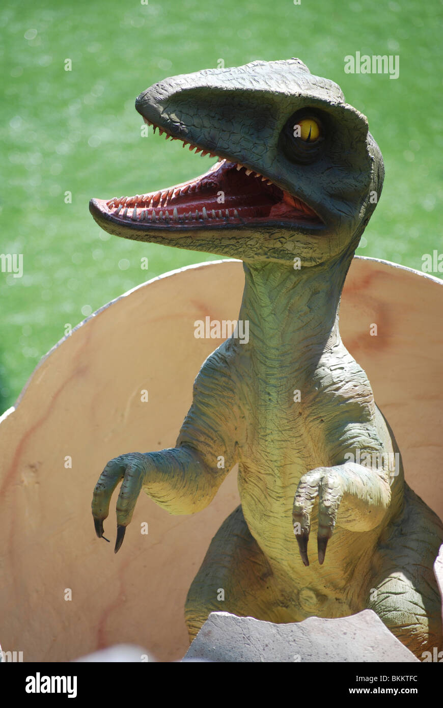 Young Velociraptor hatches from an egg - Stock Image