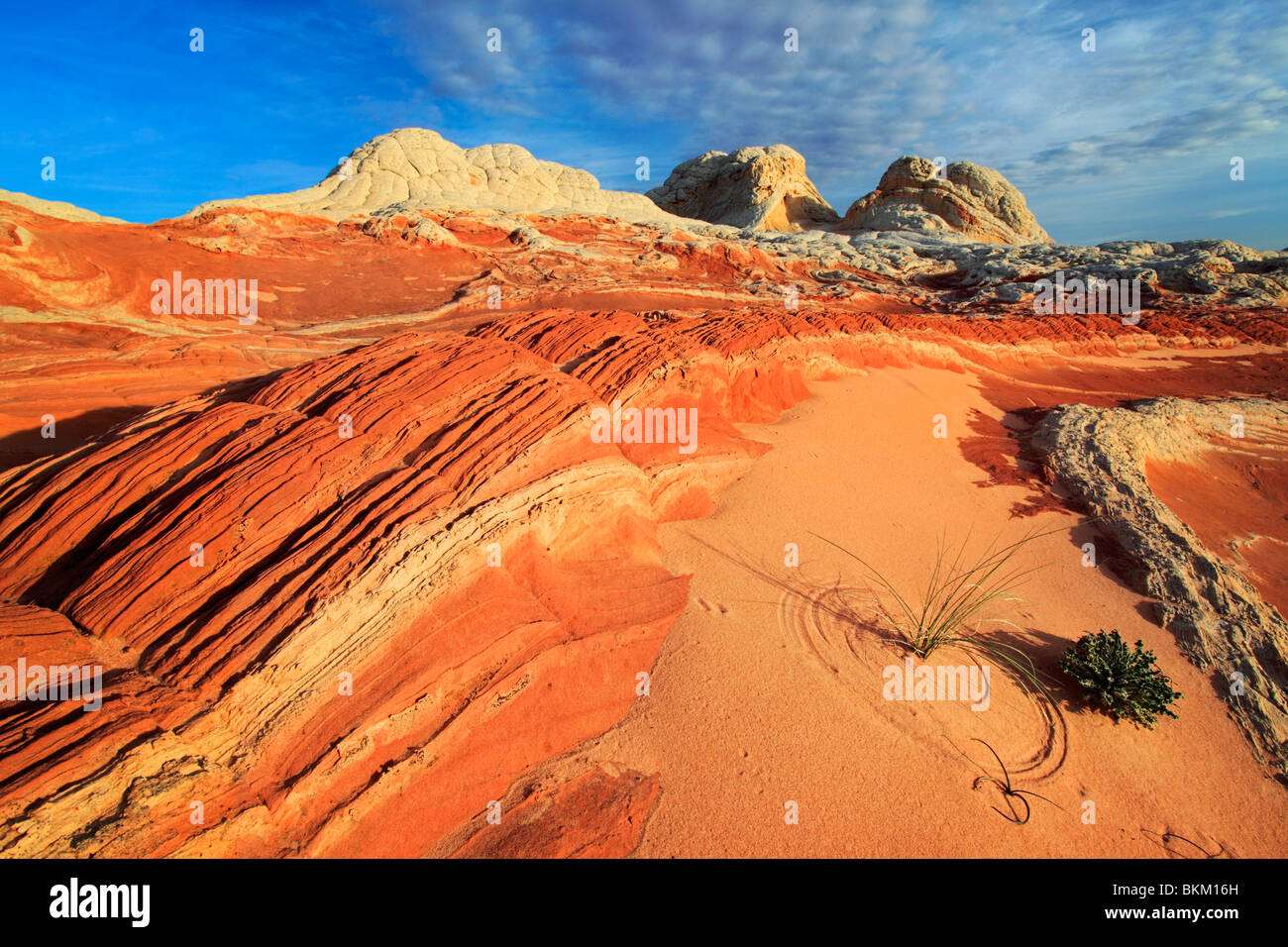 Rock formations in the White Pocket unit of the Vermilion Cliffs National Monument, Arizona - Stock Image