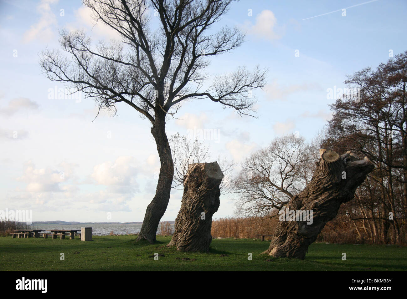 Rest stop at Arresø (Lake Arreso) with benches and interesting trees. The largest Lake in Denmark, situated - Stock Image