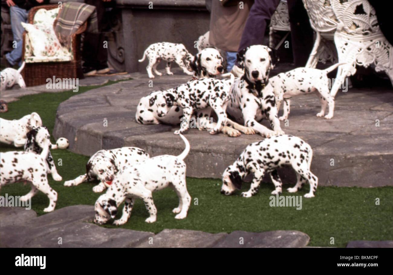 101 Dalmatians 1996 Stock Photo Alamy