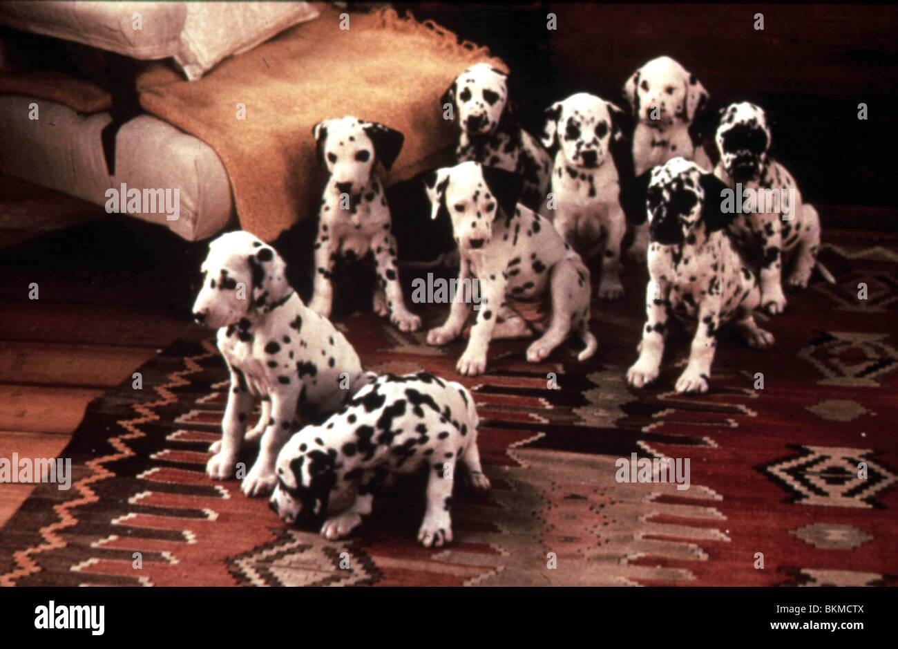 101 DALMATIANS -1996 Stock Photo