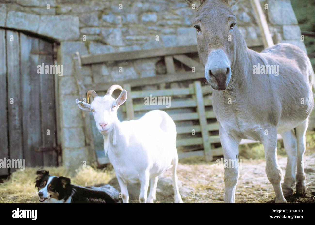 ANIMAL FARM (TVM) -1999 - Stock Image