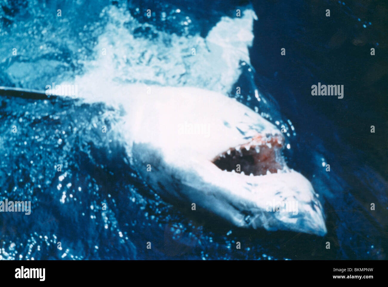 JAWS -1975 - Stock Image