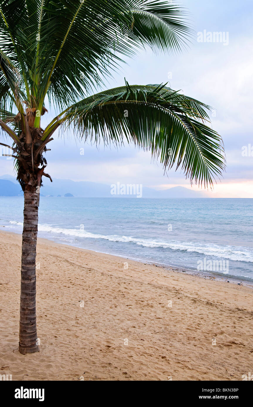 Palm tree on tropical beach in Puerto Vallarta, Jalisco, Mexico - Stock Image