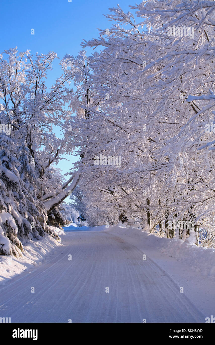 A Tree-Lined Road Covered With Snow In The Winter - Stock Image