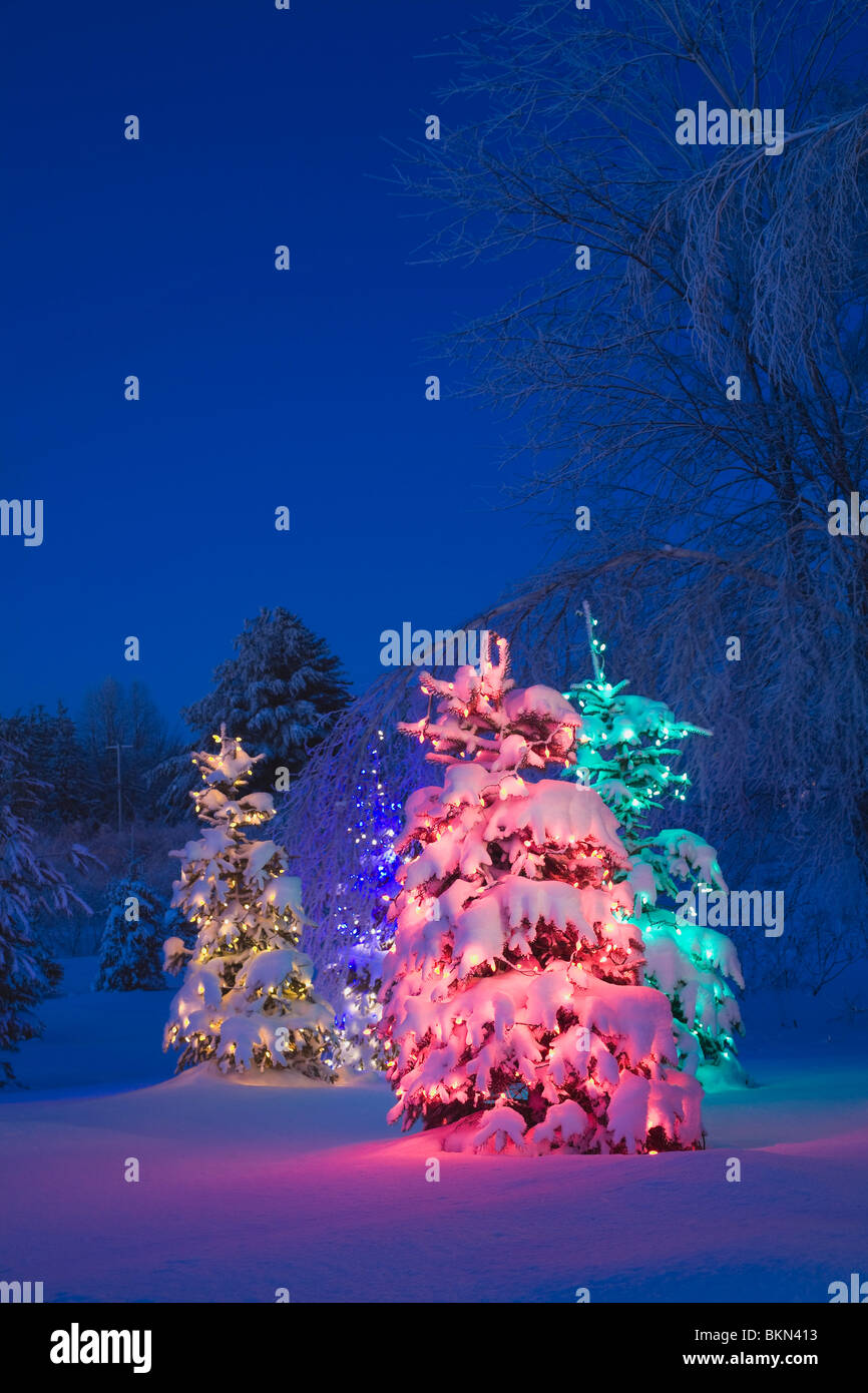 trees covered with snow and illuminated with colored lights stock image