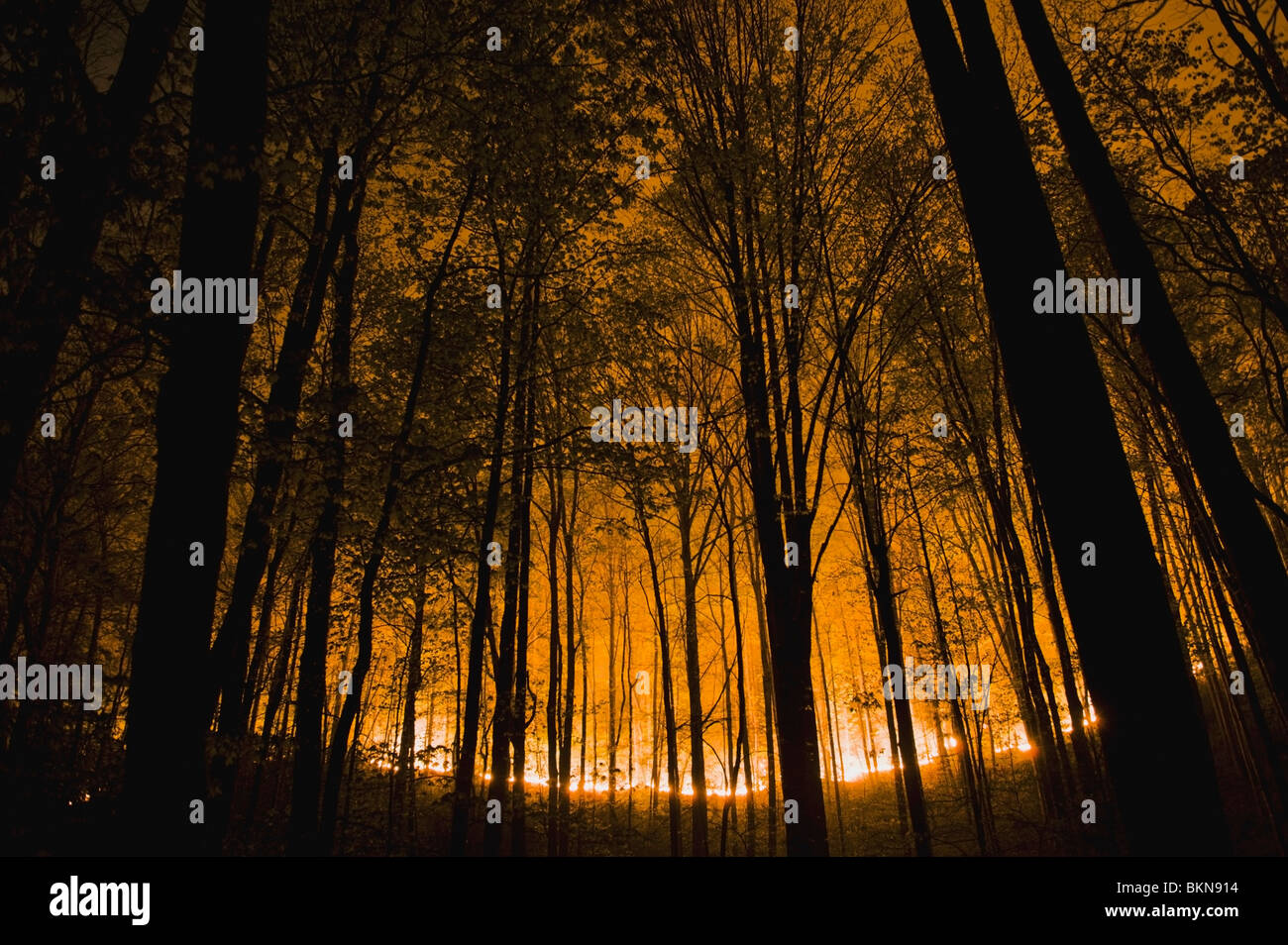 Tennessee, United States Of America; Glow Of Forest Ground Fire At Night In The Great Smokey Mountains National - Stock Image