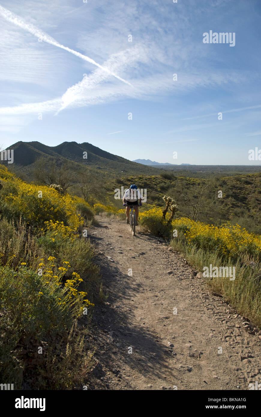 A mountain biker on a trail at Cave Creek Regional Park, Cave Creek, near Phoenix, Arizona, USA - Stock Image