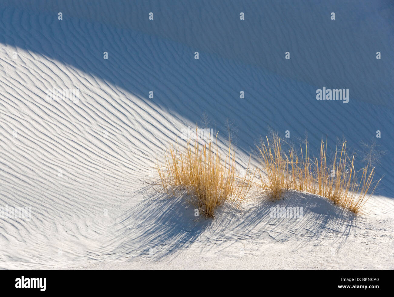 Grasses grow next to a white sand dune at White Sands National Monument, New Mexico. - Stock Image