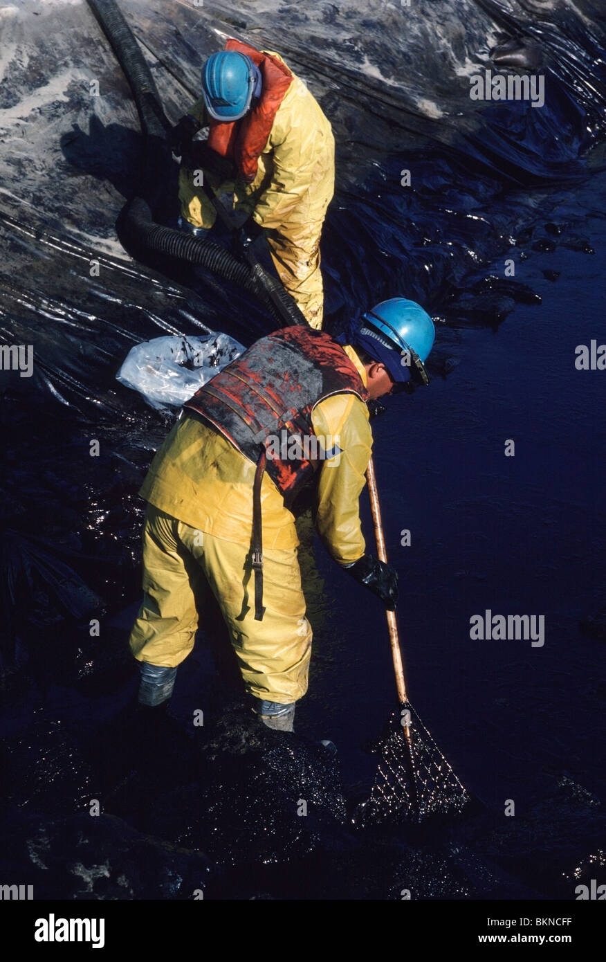 Cleanup workers sucking up a crude oil at Huntington Beach after British Petroleum oil spill in Southern California, - Stock Image