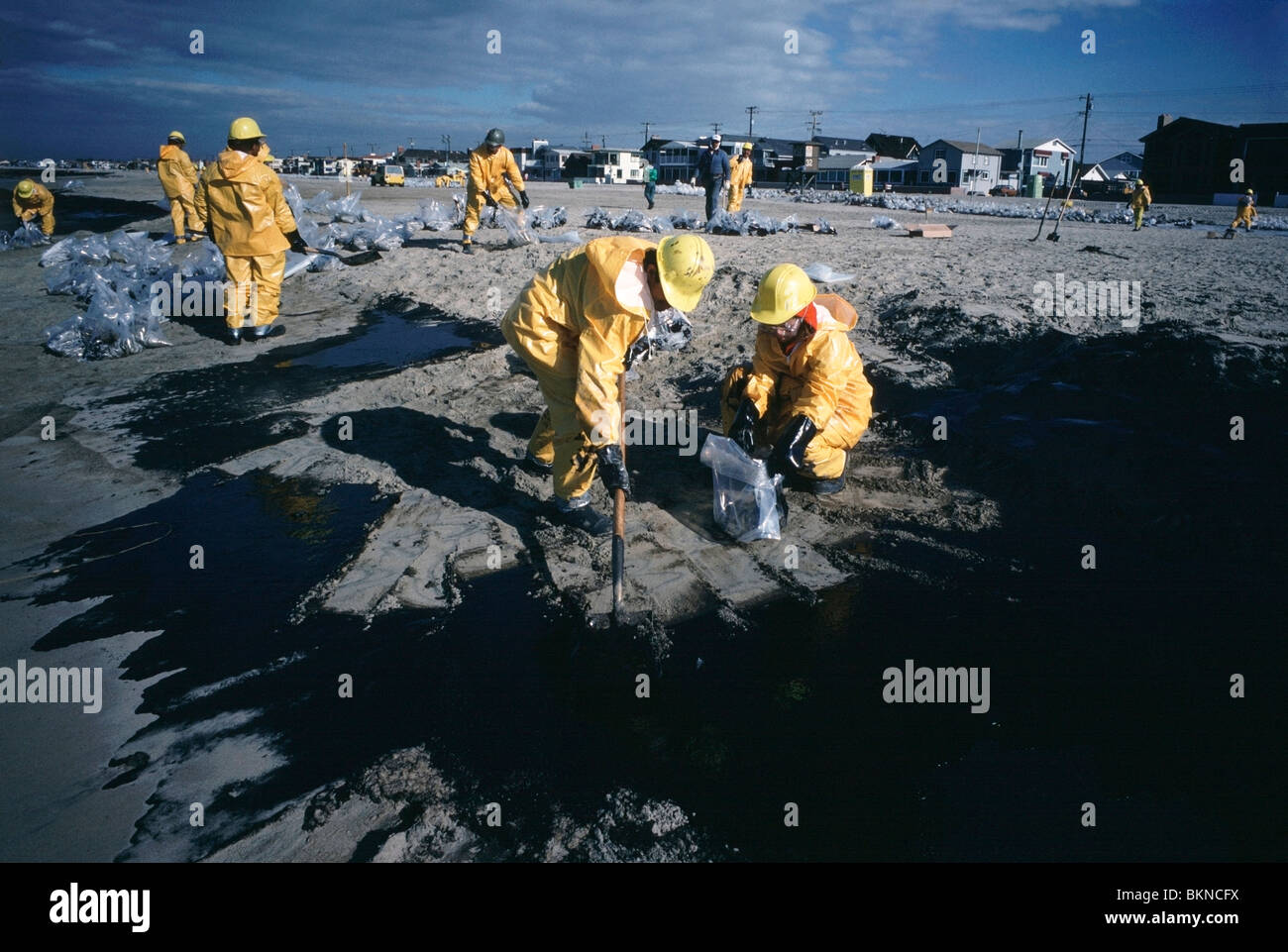 Cleanup crews shovel crude oil from Huntington Beach after a 1990 British Petroleum oil spill in Southern California. - Stock Image