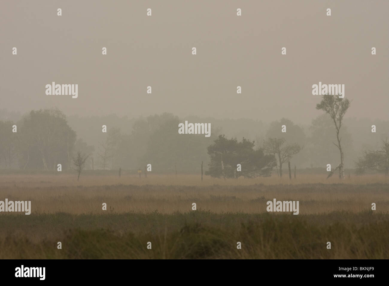 Mistig grauw typisch hollands landschap van de Kampina Stock Photo