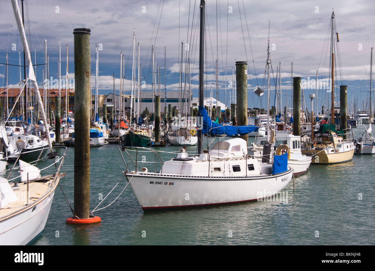 Yachts and motor launches moored in a marina, Nelson, New Zealand - Stock Image