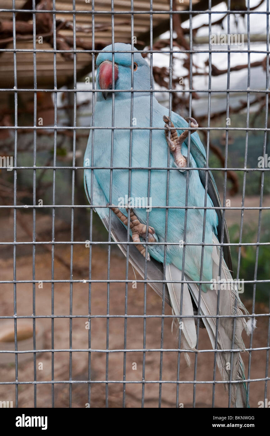 Wire Bird Cage Stock Photos & Wire Bird Cage Stock Images - Alamy