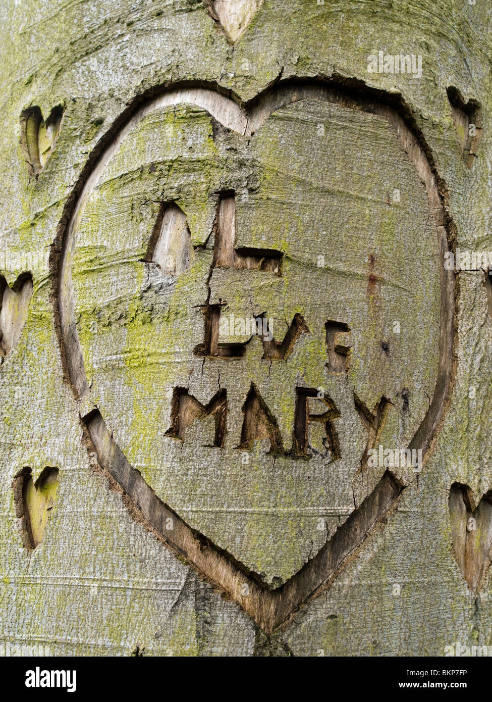 A love heart carved into a tree, Derbyshire England UK - Stock Image