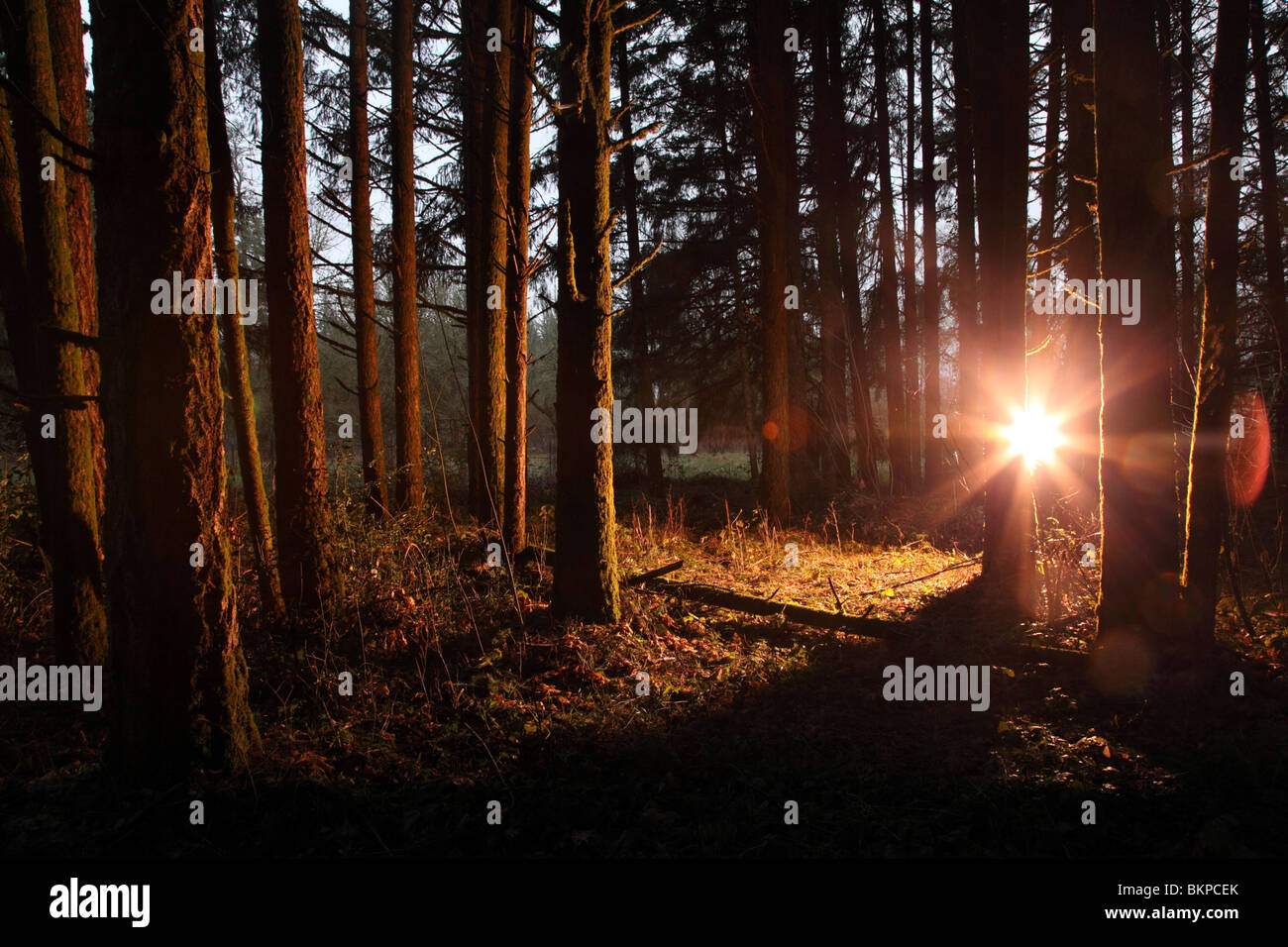 Bright light shining in forest - Stock Image
