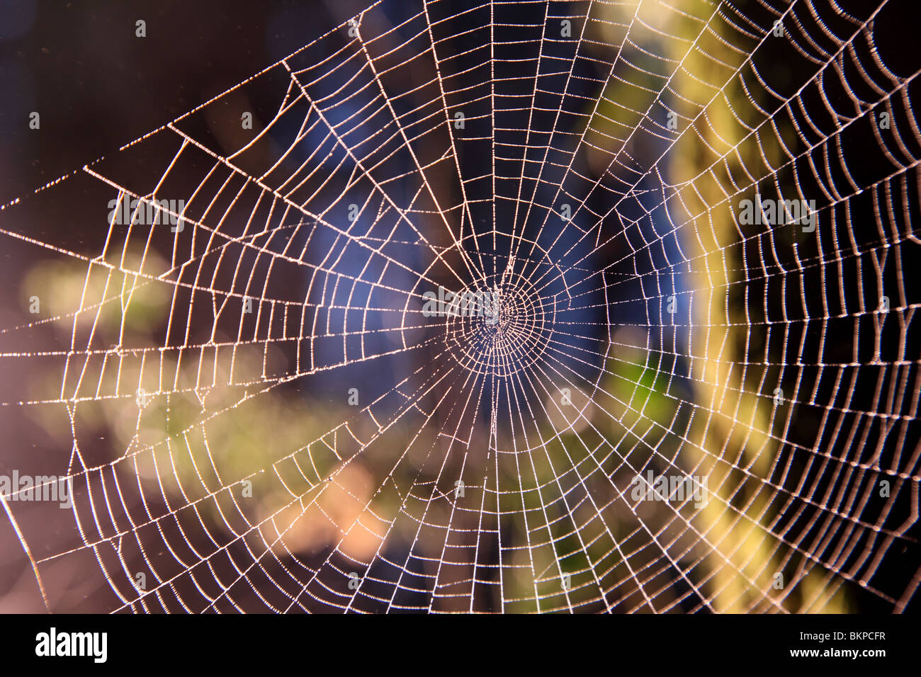 Spider web in the woods - Stock Image