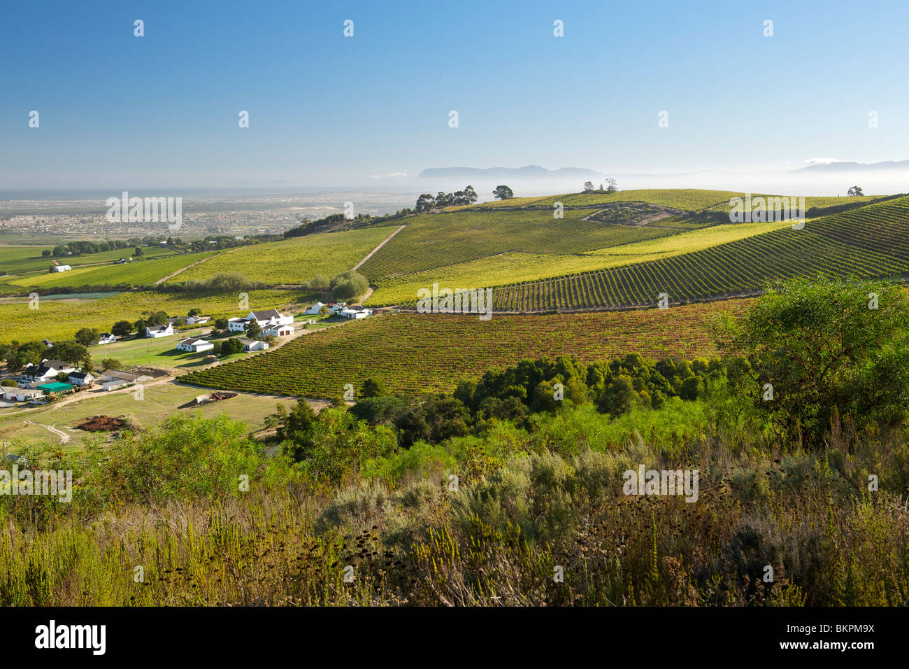 View across vineyards of the Stellenbosch district, Western Cape Province, South Africa. - Stock Image