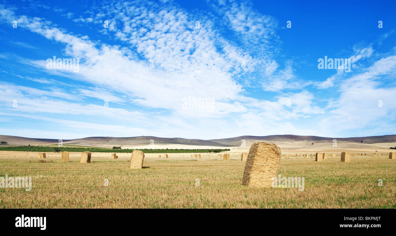 great panoramic image of a field with haybales in the country Stock Photo
