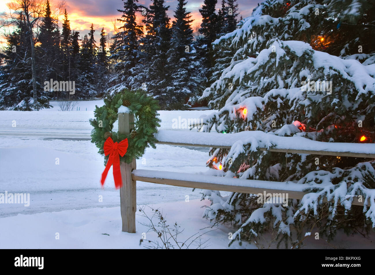 Holiday Wreath hanging on split-rail fence next to decorated tree w/sunset Anchorage Alaska Winter Stock Photo