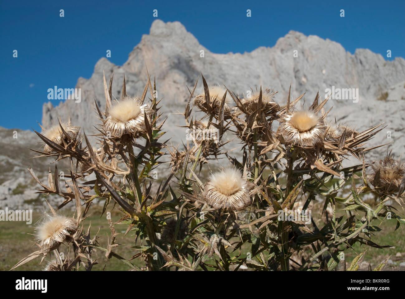 Picos de Europa, Northern Spain - Stock Image