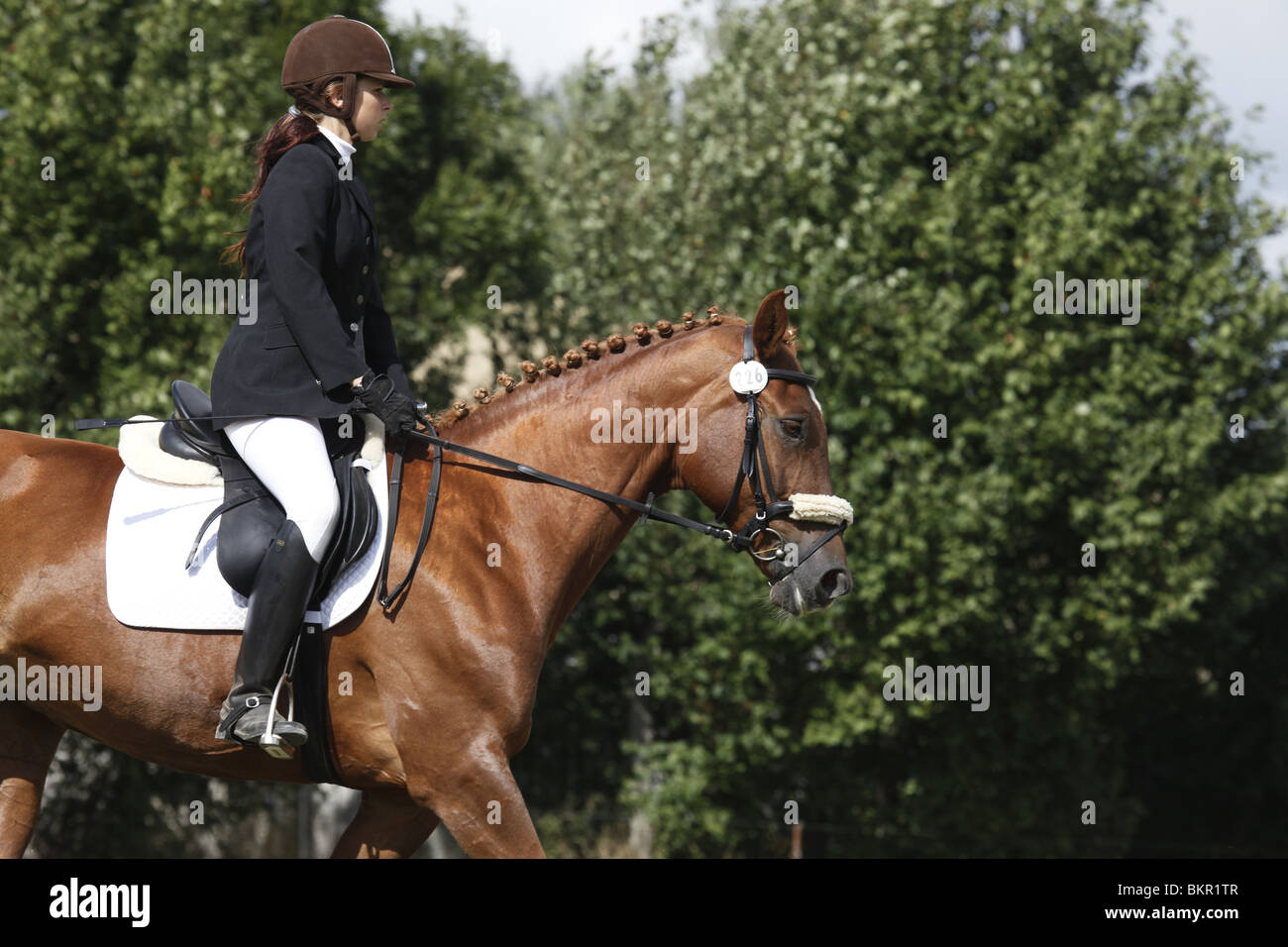 Reiterin auf Deutschem Sportpferd / riding woman Stock Photo