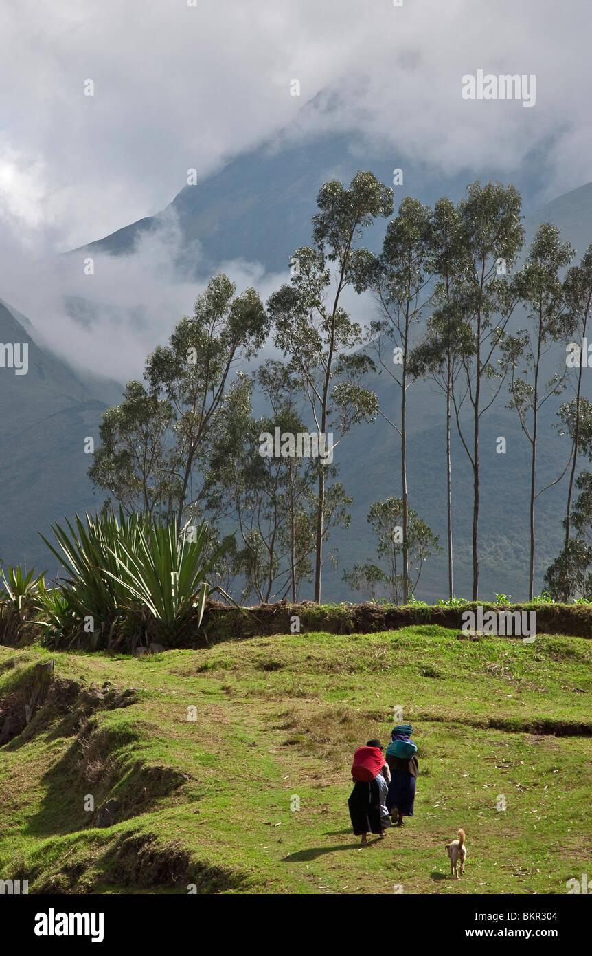 Ecuador, Homeward bound near Otavalo. - Stock Image