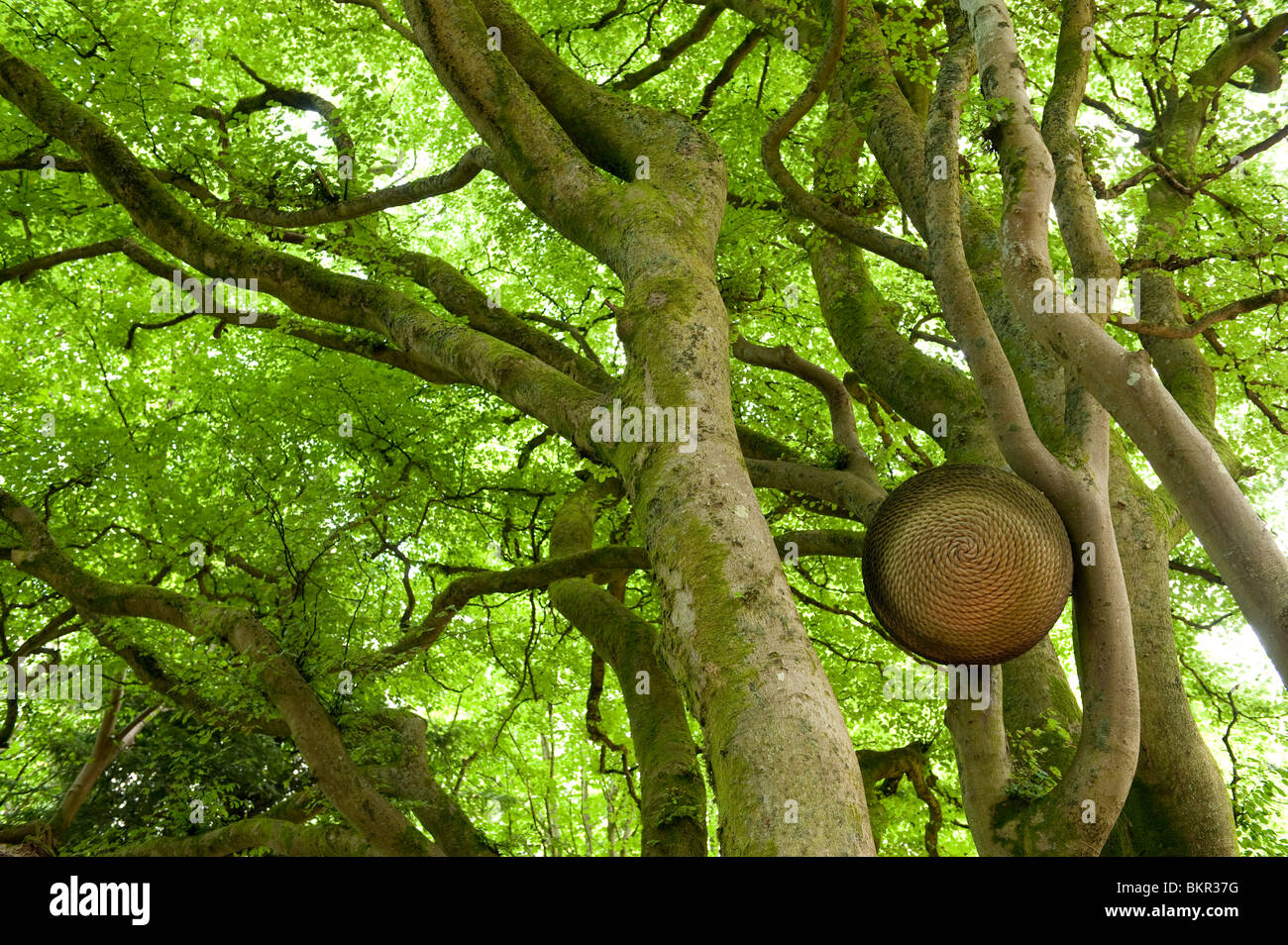 Whirling Beans, public art by Colin Jones. Kielder Water & Forest Park, Northumberland, England. - Stock Image