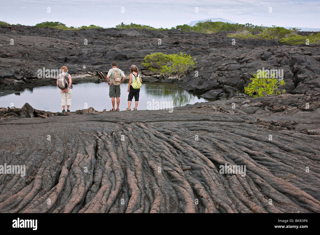 Galapagos Islands, A lava rock pool beside   pahoehoe   lava (named after the Hawaiian for   rope  ) on Fernandina - Stock Image