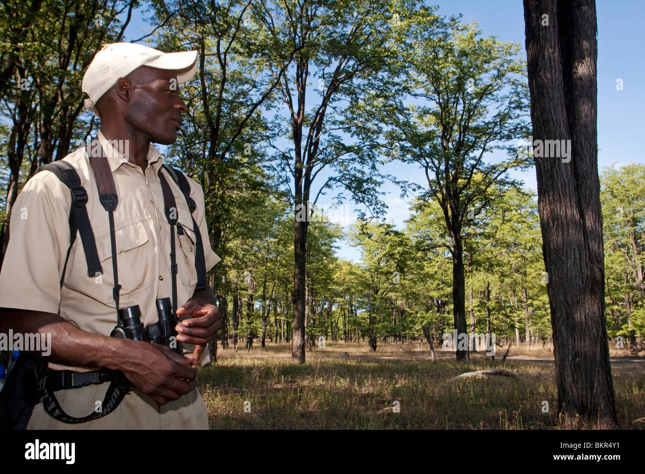 Malawi, Upper Shire Valley, Liwonde National Park. A safari guide interprets the Mopane ecosystem bordering the - Stock Image