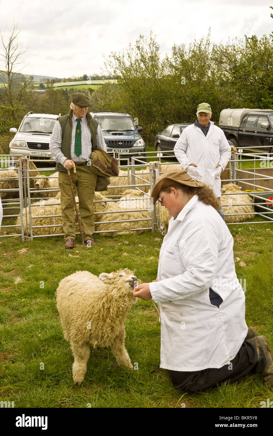 country or county show with farmers showing sheep, live stock pens in background Devon England UK 2010 - Stock Image