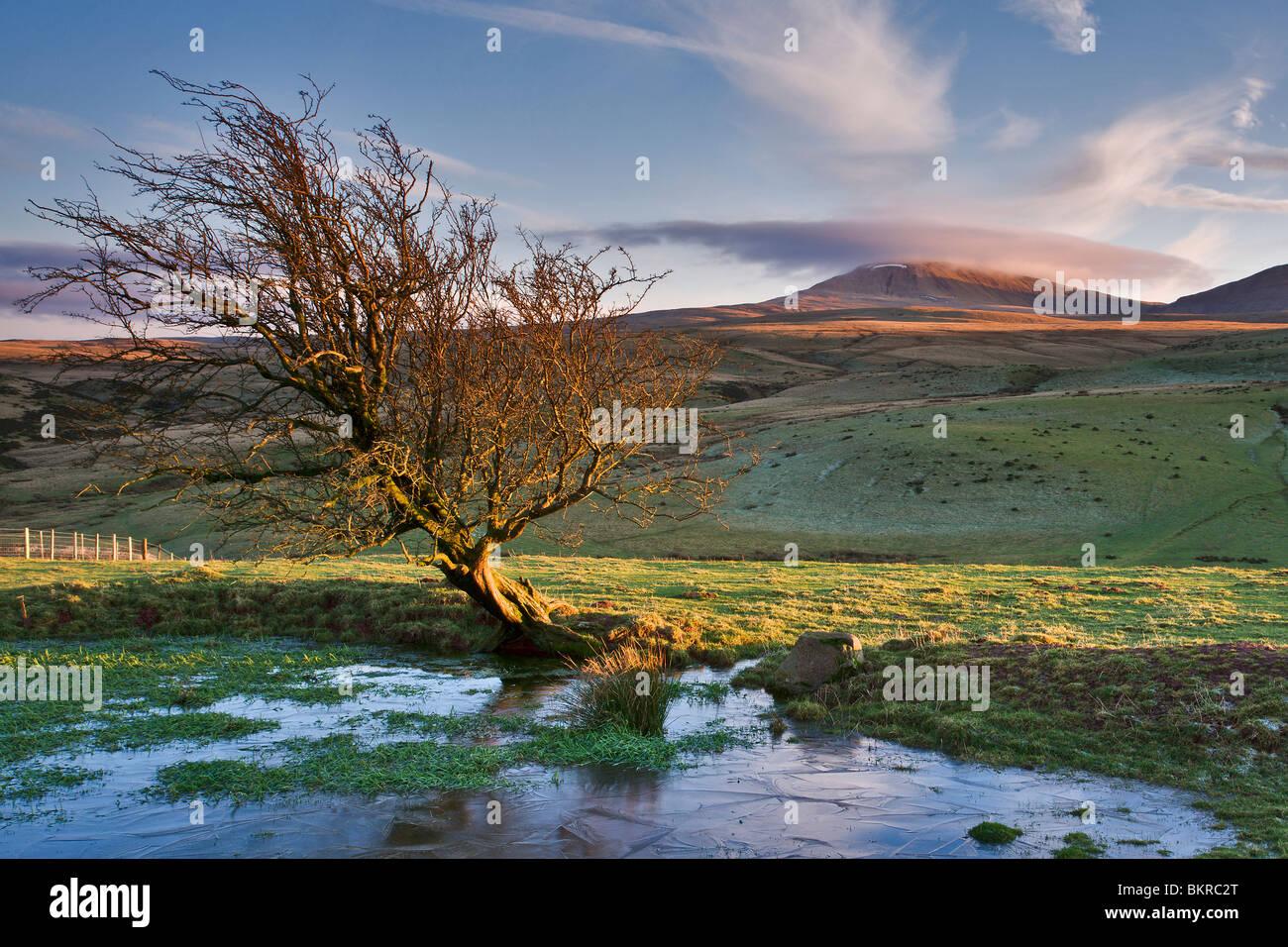 Winter evening light on the Black Mountain Carmarthenshire Wales UK - Stock Image