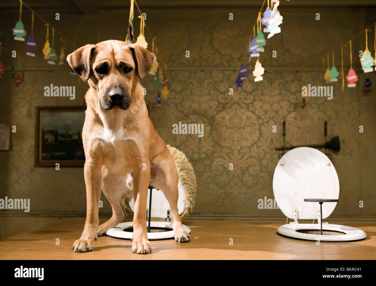 HOTEL FOR DOGS (2009) THOR FREUDENTHAL (DIR) 003 - Stock Image