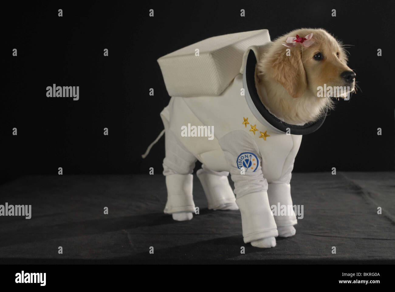 SPACE BUDDIES (2009) ROBERT VINCE (DIR) 004 - Stock Image